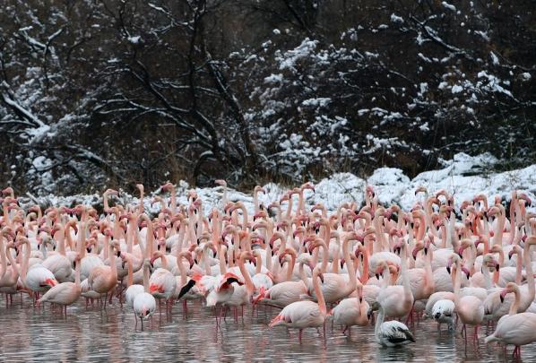 Орнитологический парк Пон-де-Го после снегопада.  Фото: Anne-Christine Poujoulat/AFP/EastNews