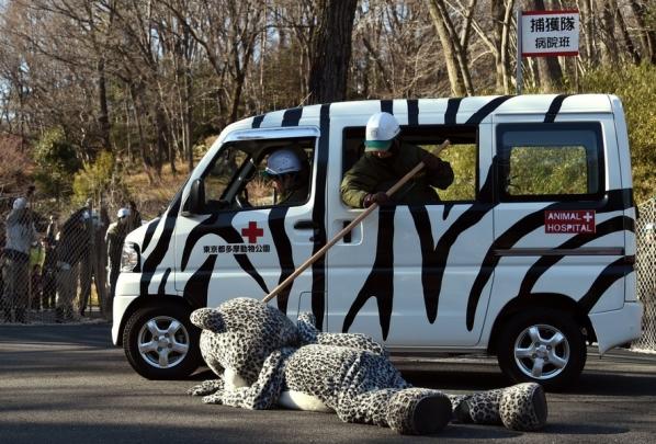 Учения сотрудников зоопарка, в ходе которых отрабатываются действия при побеге животных. Фото: Toshifumi Kitamura/AFP/EastNews