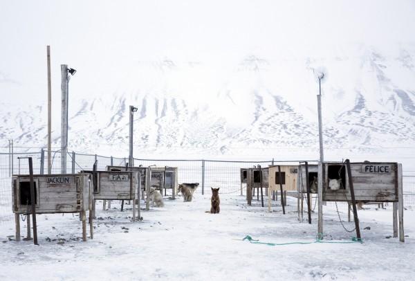 Собаки на окраине Лонгйира — самого северного поселения в мире. Фото: Anna Filipova / Reuters