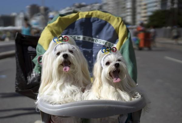 Участники карнавала животных в Рио-де-Жанейро. Фото: Leo Correa / AP / EastNews